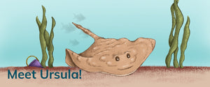 Meet Ursula the Undulate Ray!