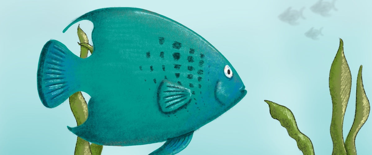 A is for Angelfish
