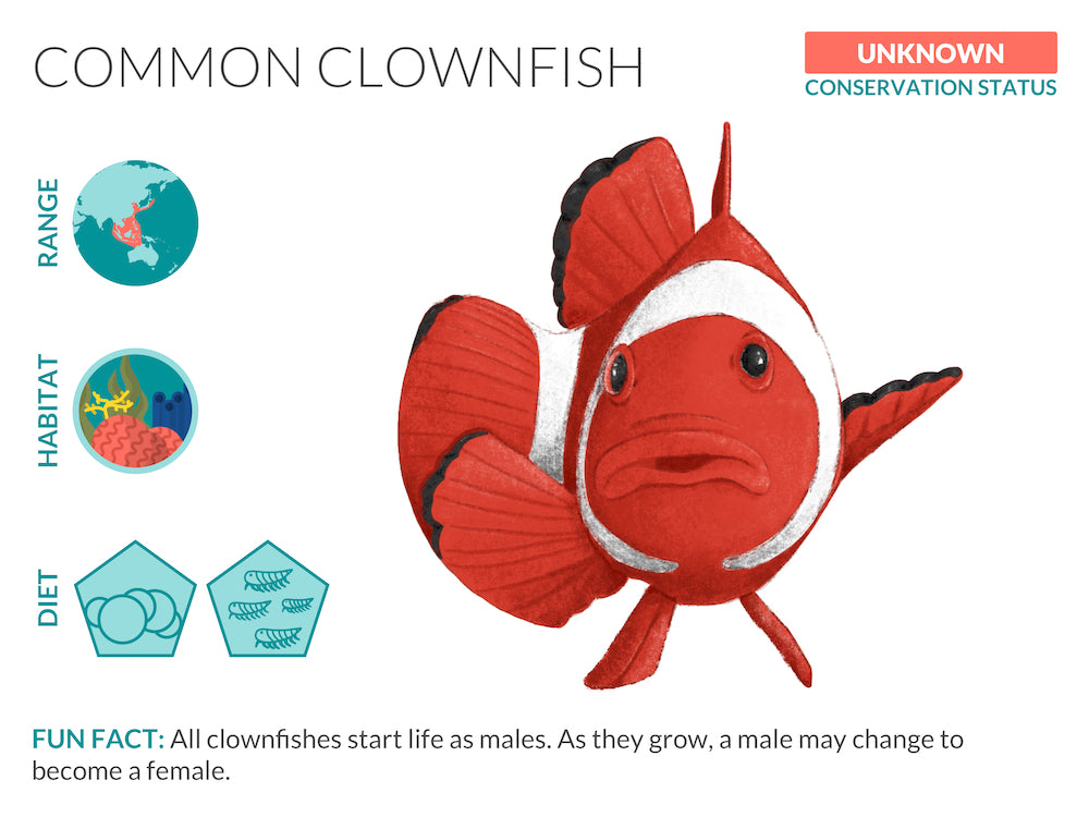 Clownfish Data Sheet Unframed Art Print