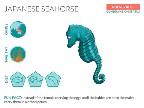 Japanese Seahorse Data Sheet Unframed Art Print
