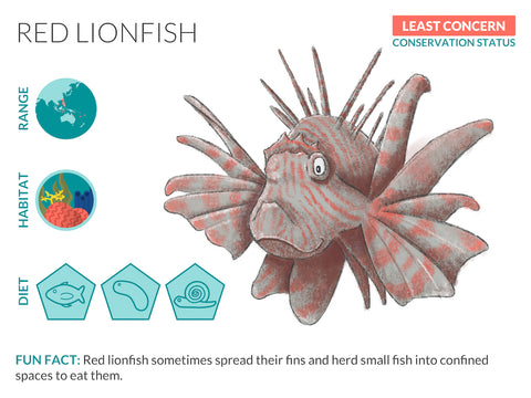Red Lionfish Data Sheet Unframed Art Print
