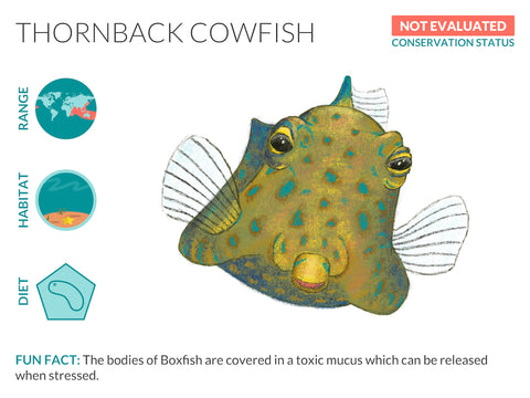Thornback Cowfish Data Sheet Unframed Art Print