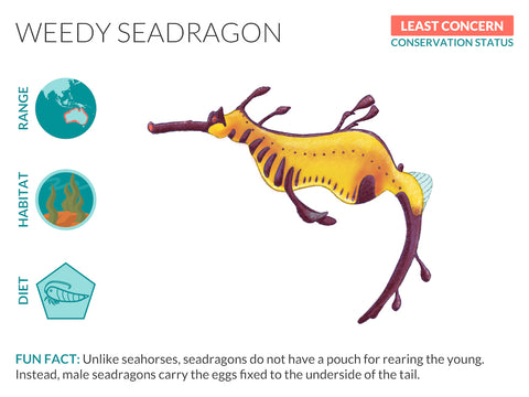 Weedy Seadragon Data Sheet Unframed Art Print