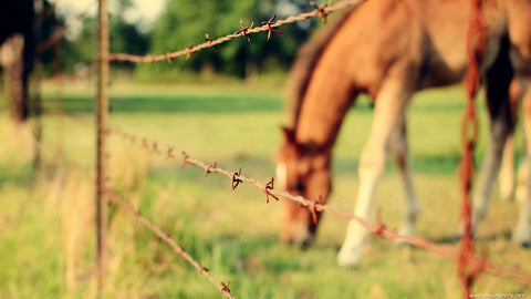 barbed wire horse fence