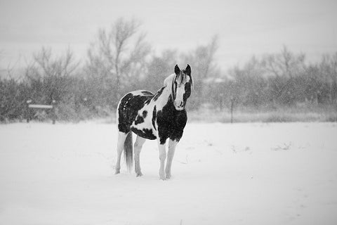 Horse during the winter months
