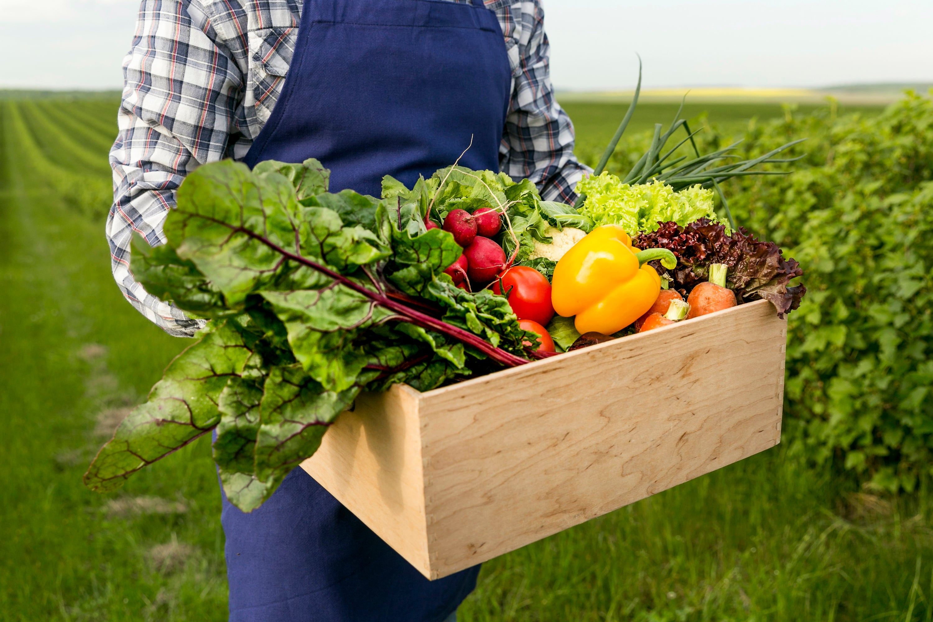 Vegetables in Box, What Produce is in Season in Autumn?