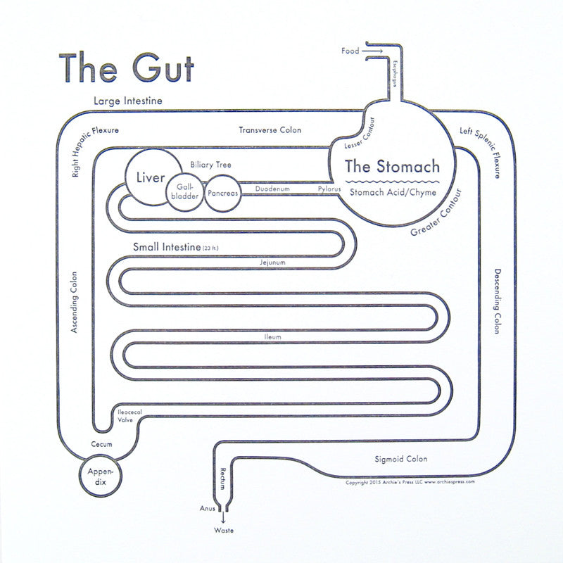 The Gut Small Map Print