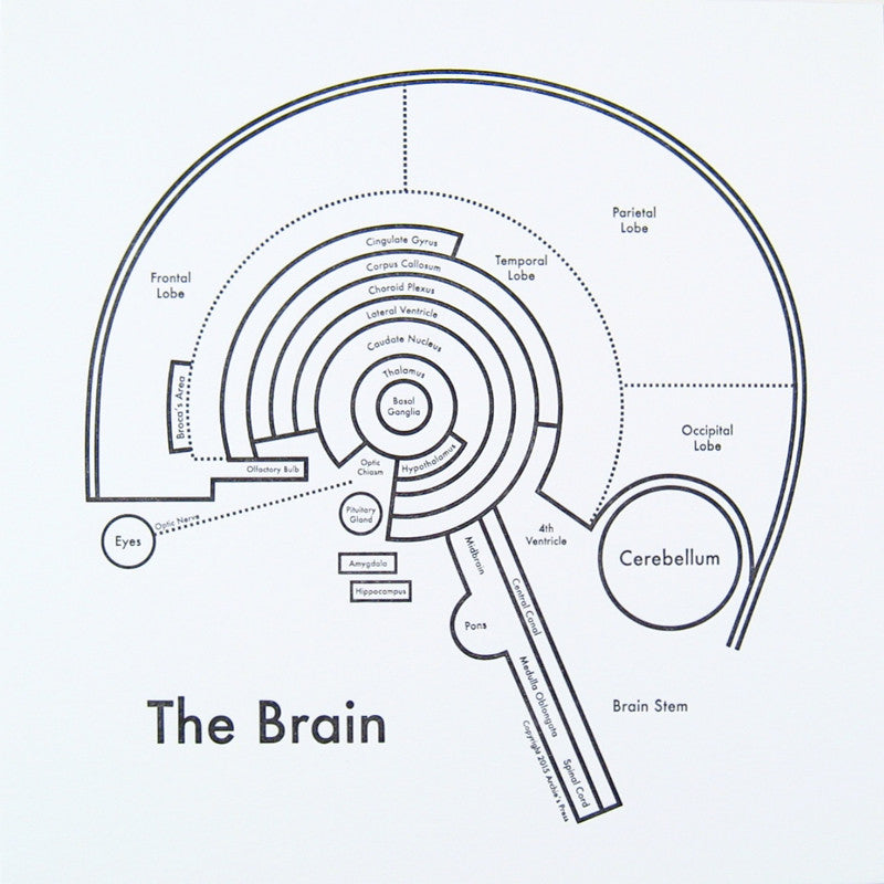 The Brain Small Map Print