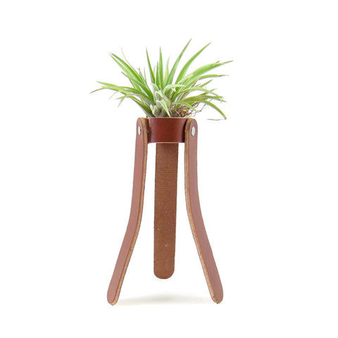 Leather Air Plant Holder