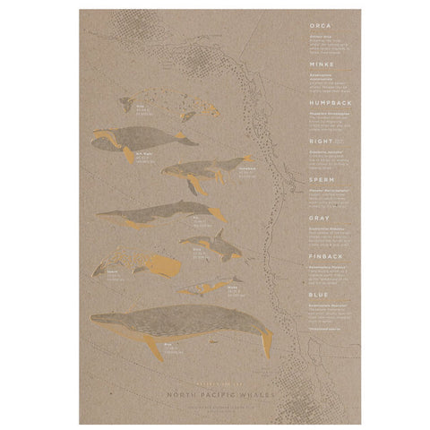 North Pacific Whale Migration Poster