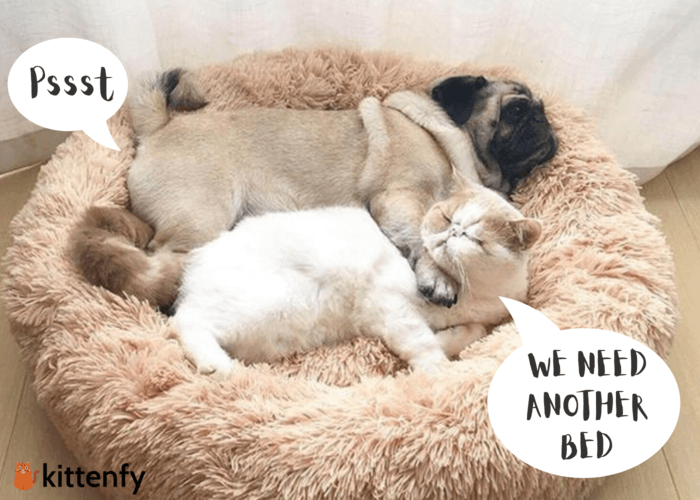 cat and dog lying together on calming pet bed