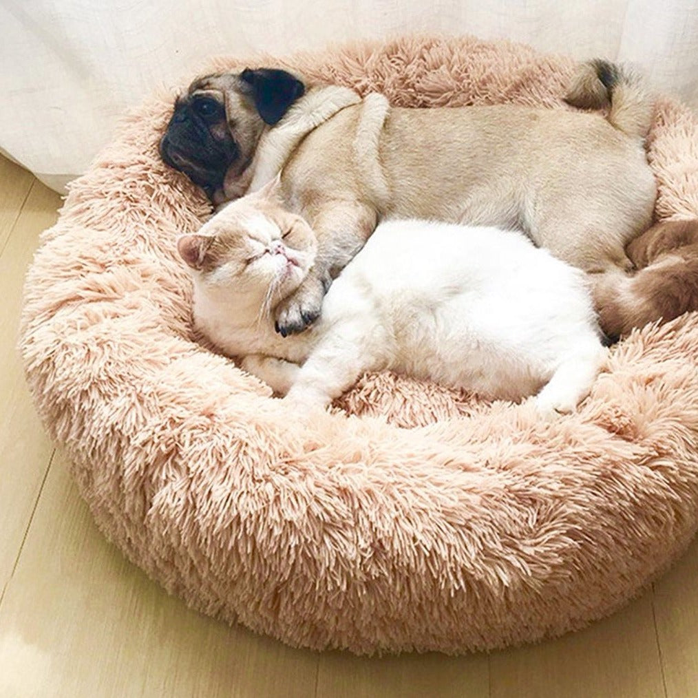 dog and cat sharing a marshmallow pet bed