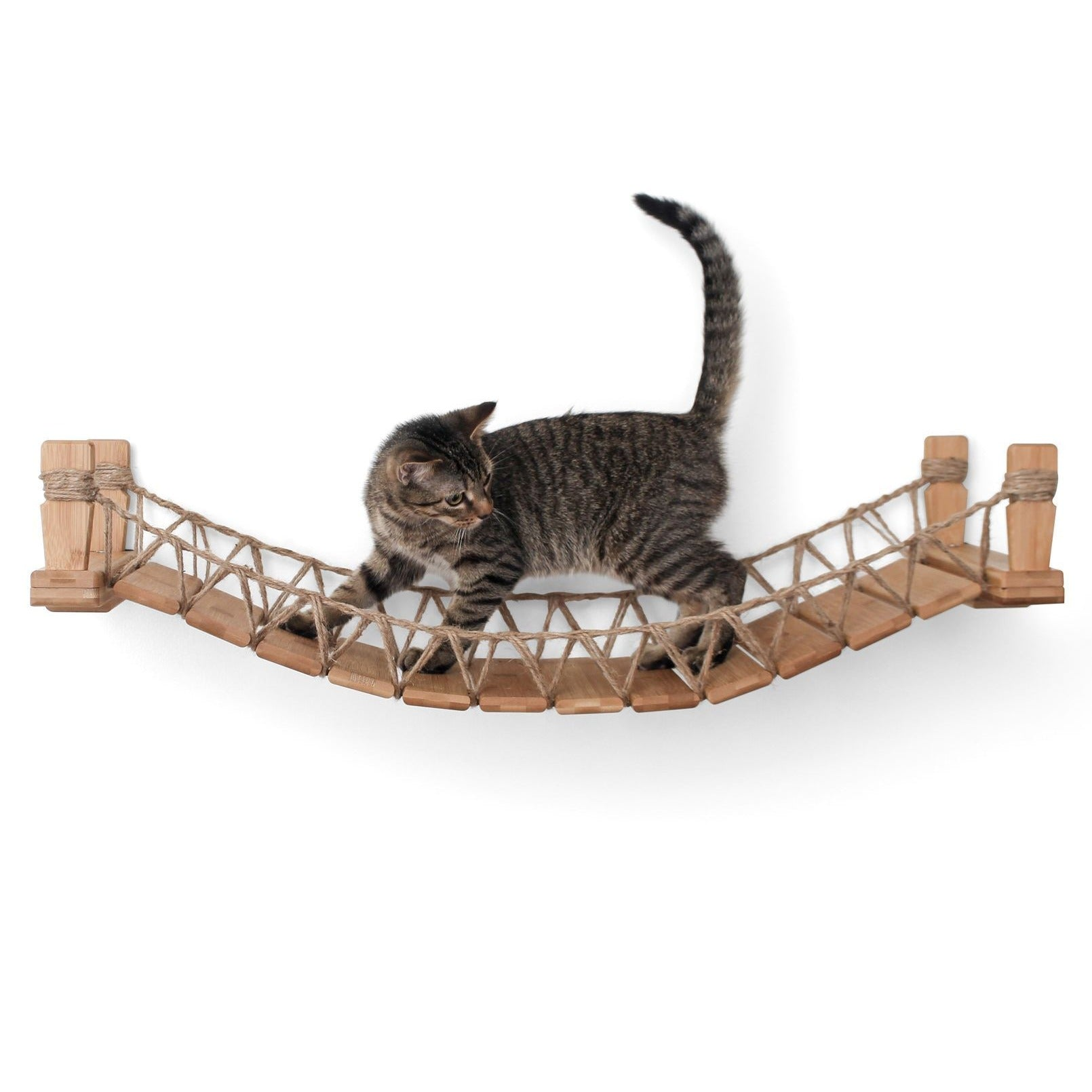 Cat Bridge Catastrophic Creations