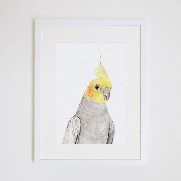 Colin the Cockatiel Print