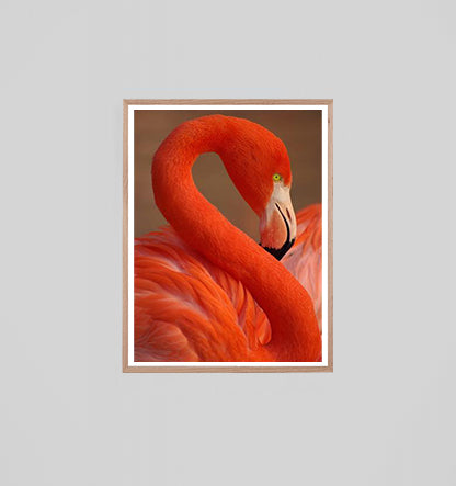 Pink Flamingo - 850mm x 1150mm