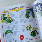 More Fun With Nature (Take Along Guides) by Mel Boring, Diane Burns, et al. - USED