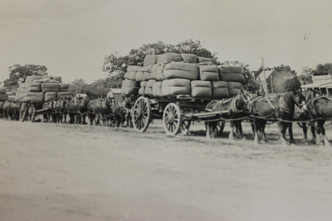 Wool Bales Being Transported by Dray Photo , Rural Victoria