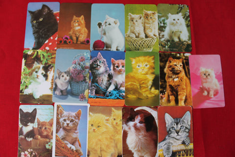 16 - Cat Swap Cards