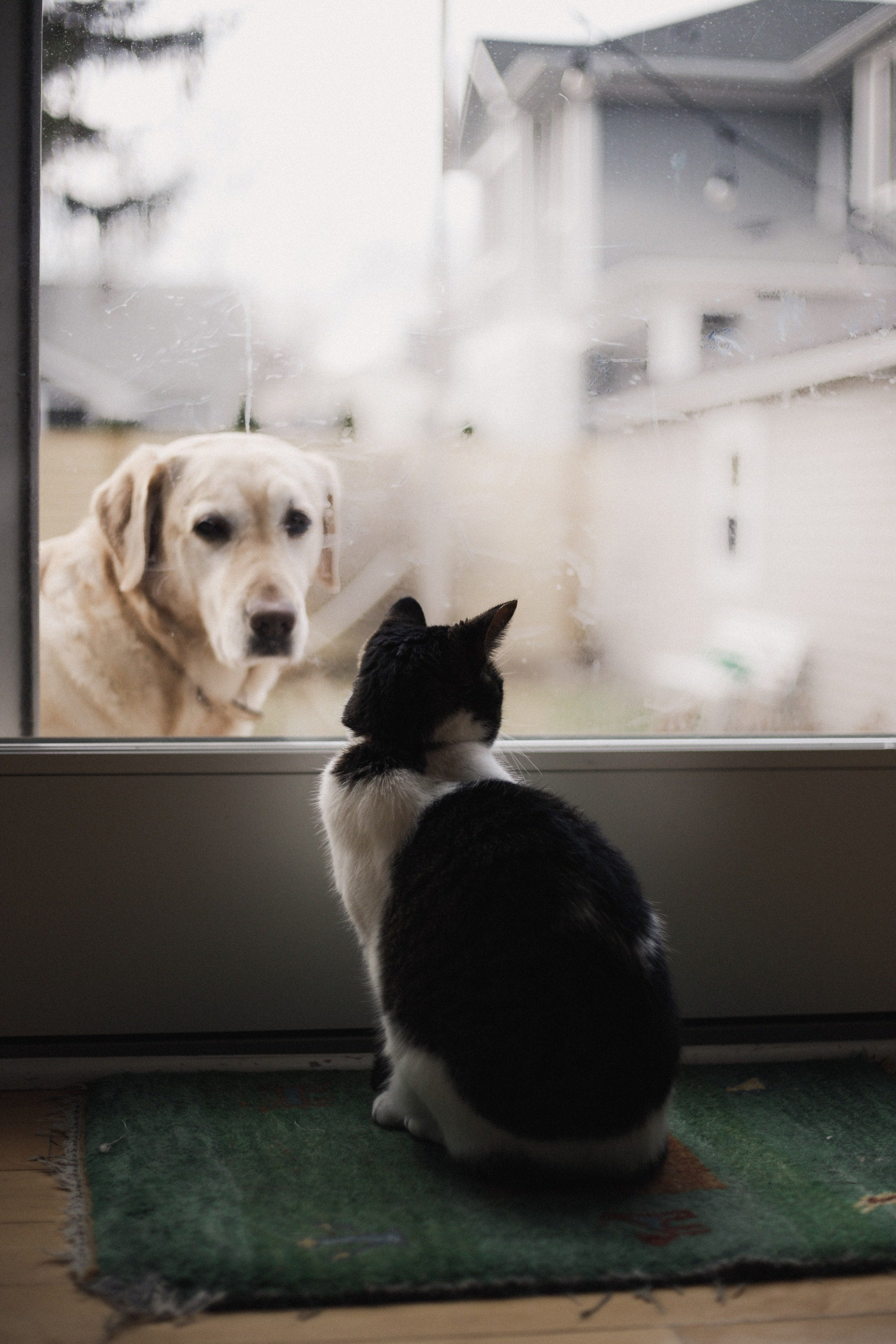 8 Tips to Help Your Cat and Dog to Get Along