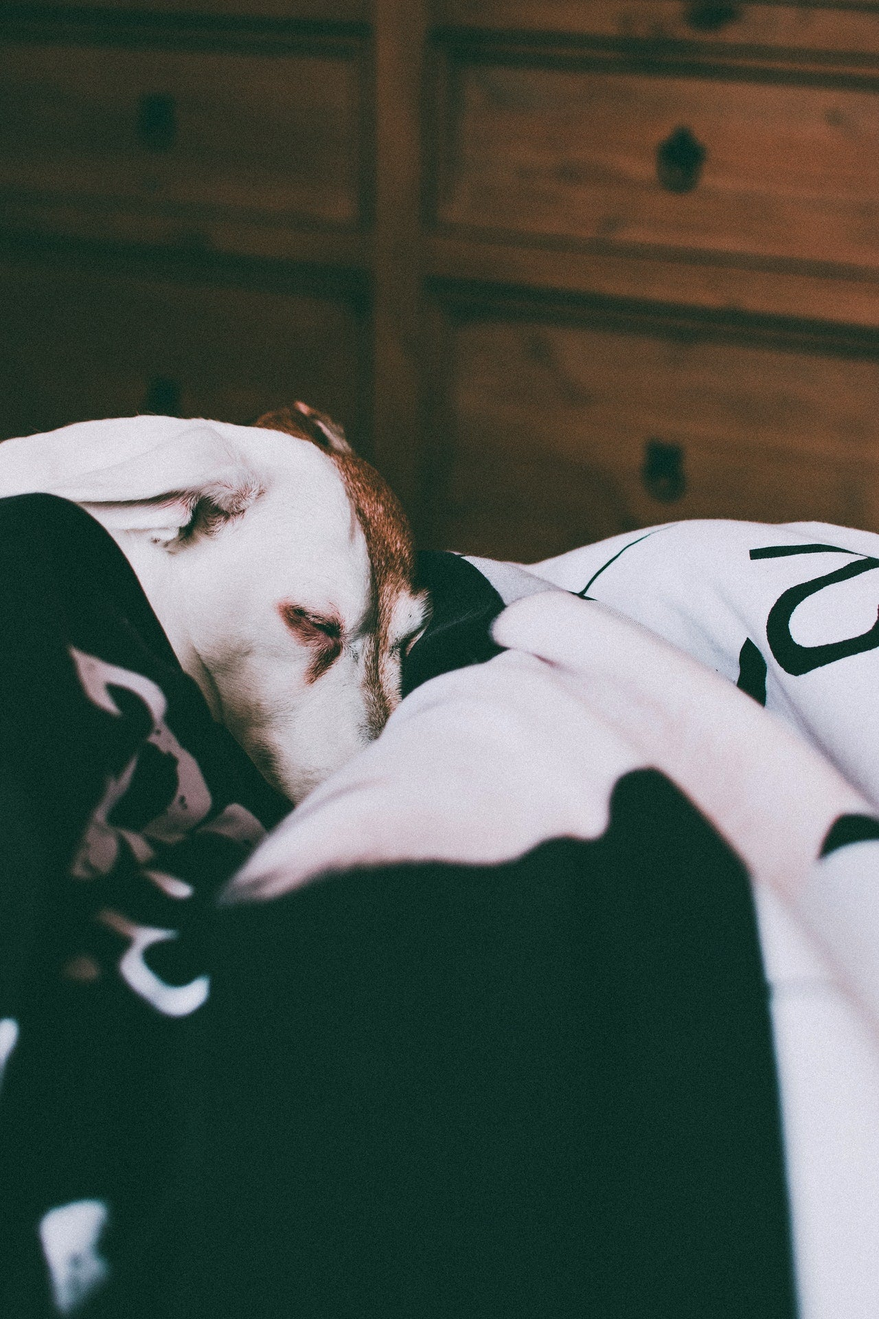6 Tips to Help Your Dog Sleep at Night