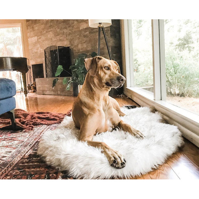 Furwell™ Orthopedic Dog Bed Memory Foam Pet Rug
