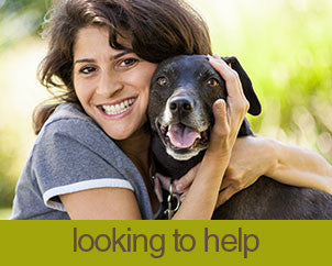 volunteer with pause4change animal rescue