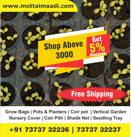 Shop Above Rs: 3000 Get Free Shipping & 5% Discount