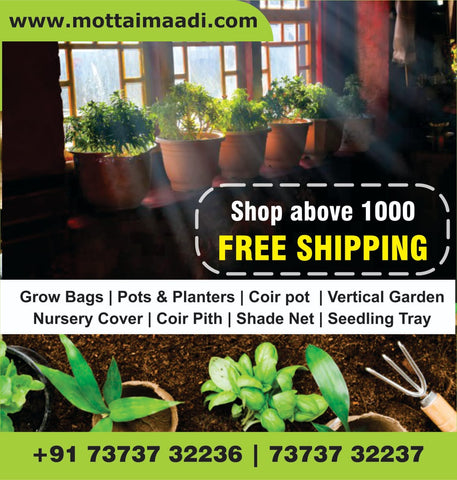 Shop Above Rs: 1000 Get Free Shipping