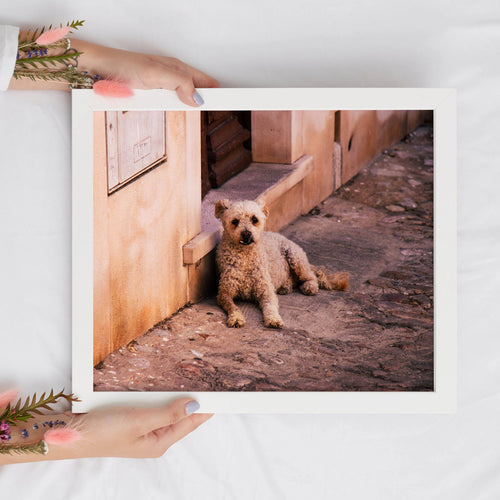 Cute Dog Digital Print | Animal Lovers Digital Prints | Printable Art - Vintage Radar