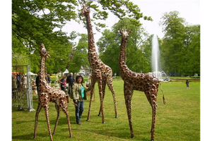 Animals - Safari - Giraffe Family