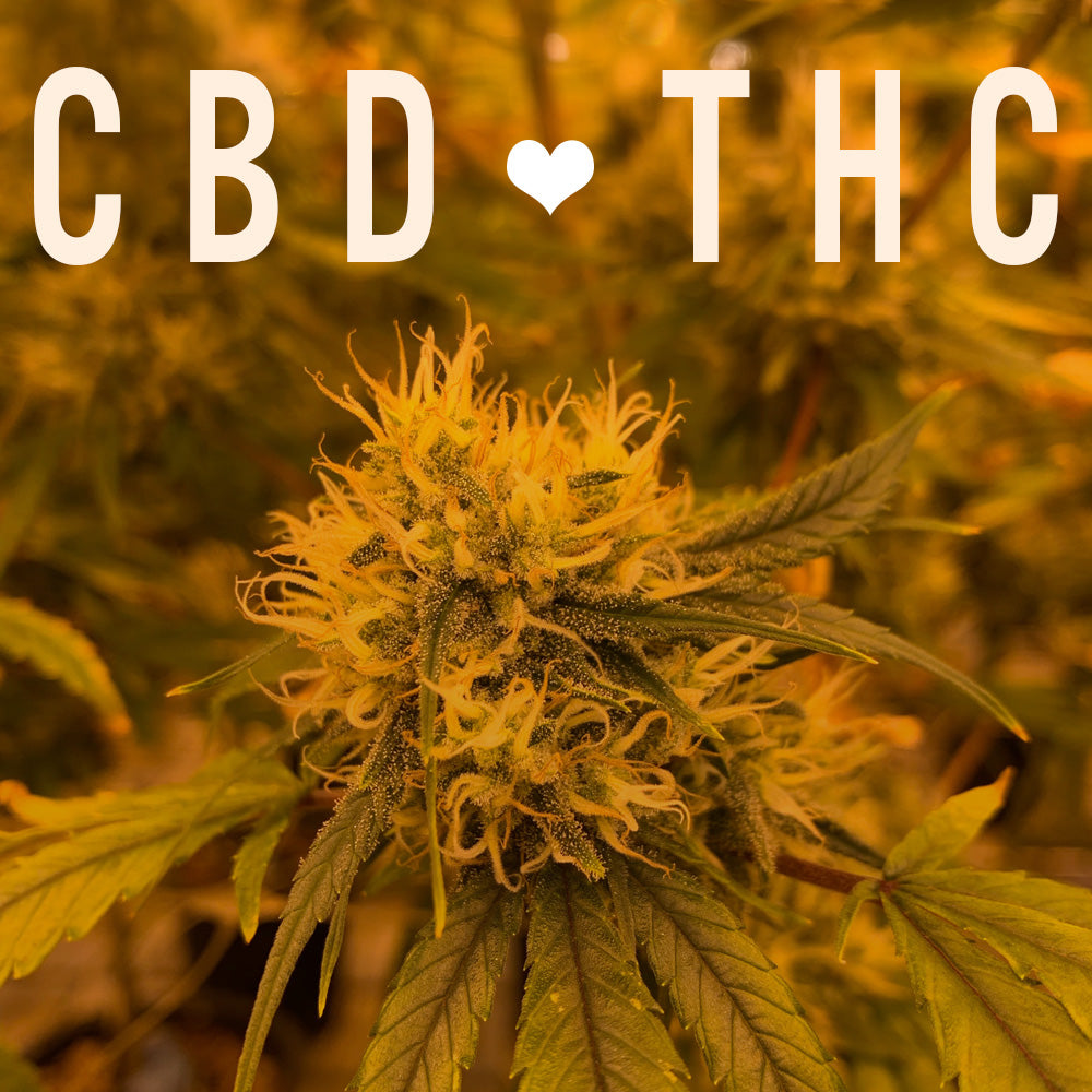 Does THC help CBD work better?
