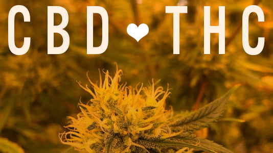 Does THC help CBD work better