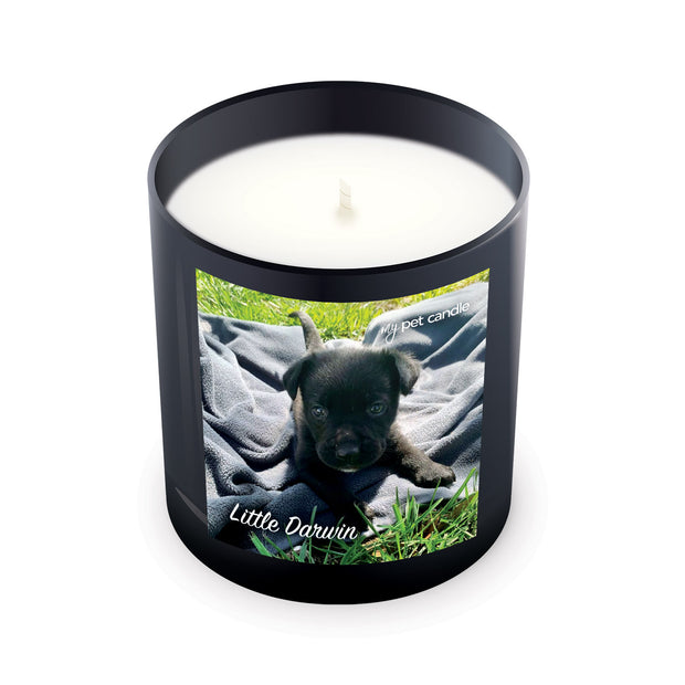 Little Darwin – 11oz Candle
