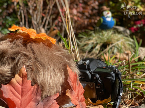 A Tribble hidden in leaves with a camera taking a photo of a bird.