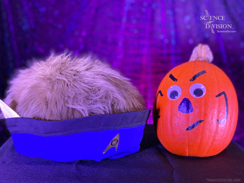 A Tribble dressed as Spock next to a pumpkin painted to look like Spock