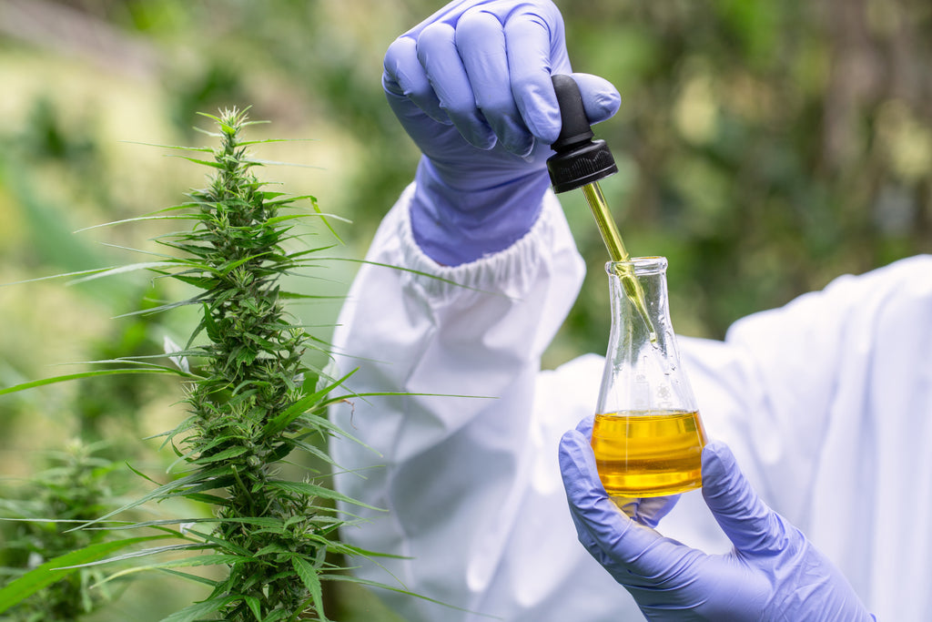 The Importance of Testing and Traceability in the CBD Market