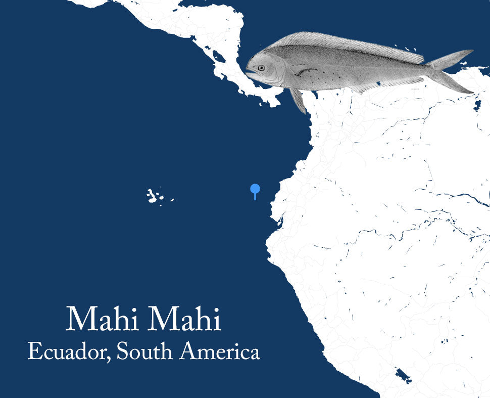 Mahi Mahi Sourcing From Ecuador