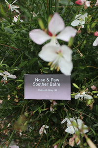 NOSE AND PAW SOOTHER BALM- with hemp oil