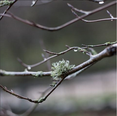 morning dew rain branch twig photograph