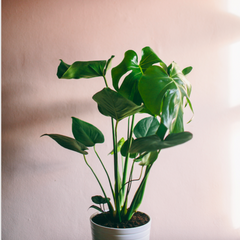 How to Care for House Plants (The Makery, Bath)