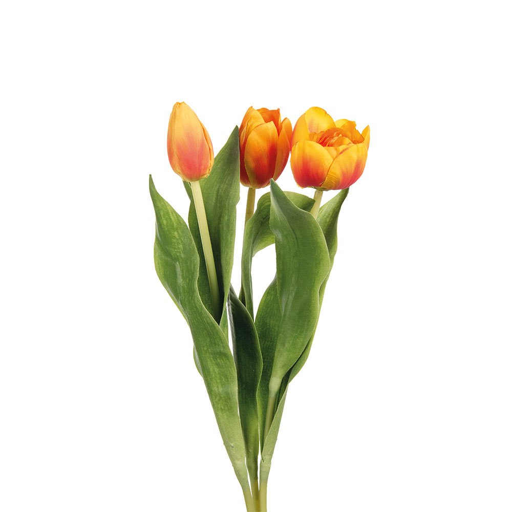 Burnt Orange Tulip - Set of 3