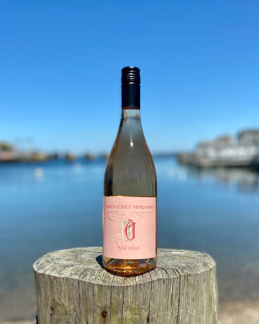 Nantucket Vineyard Rose