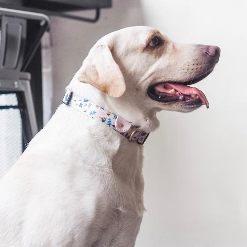 Scandi Spring Dog Collar