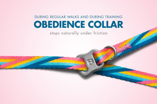 Obedience Collar - Bowie