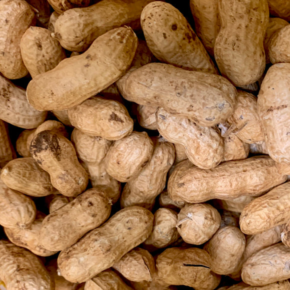 Raw New Crop Peanuts