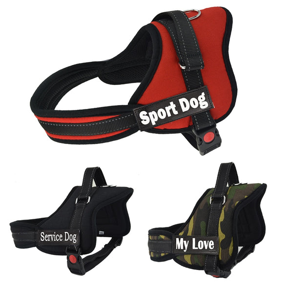 Large Dog Name Harness