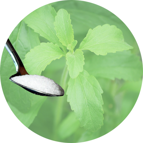 Circular shaped photo of stevia leaves and in white powdered form after processing