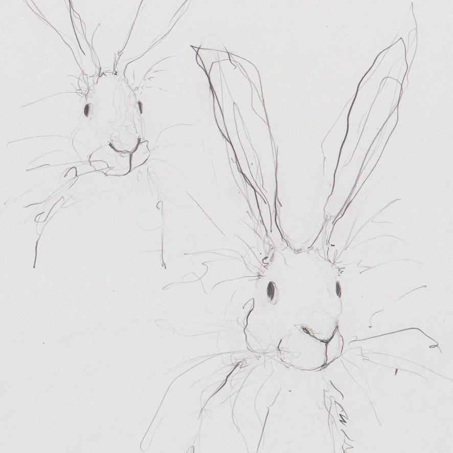 Catherine Rayner - Hare Doodles