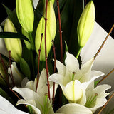 This cut flower bouquet is simply beautiful, a modern composure of stylish white oriental lilies dressed in firm and elegant white paper.