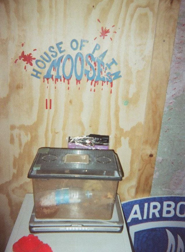 Moose's house of pain art on wall inside TOC